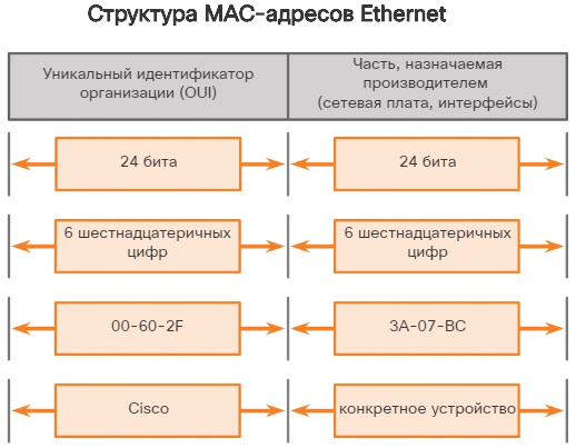 MAC-адрес: идентификация Ethernet. CCNA Routing and Switching.