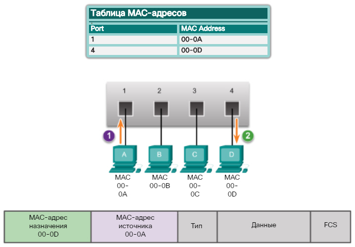 Таблица MAC-адресов. Фильтрация кадров. CCNA Routing and Switching.